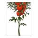 Tomate (La) - La Tomate