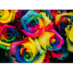 (300 Pièces) - Roses